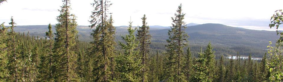 skog_finnvattsshojderna_fp